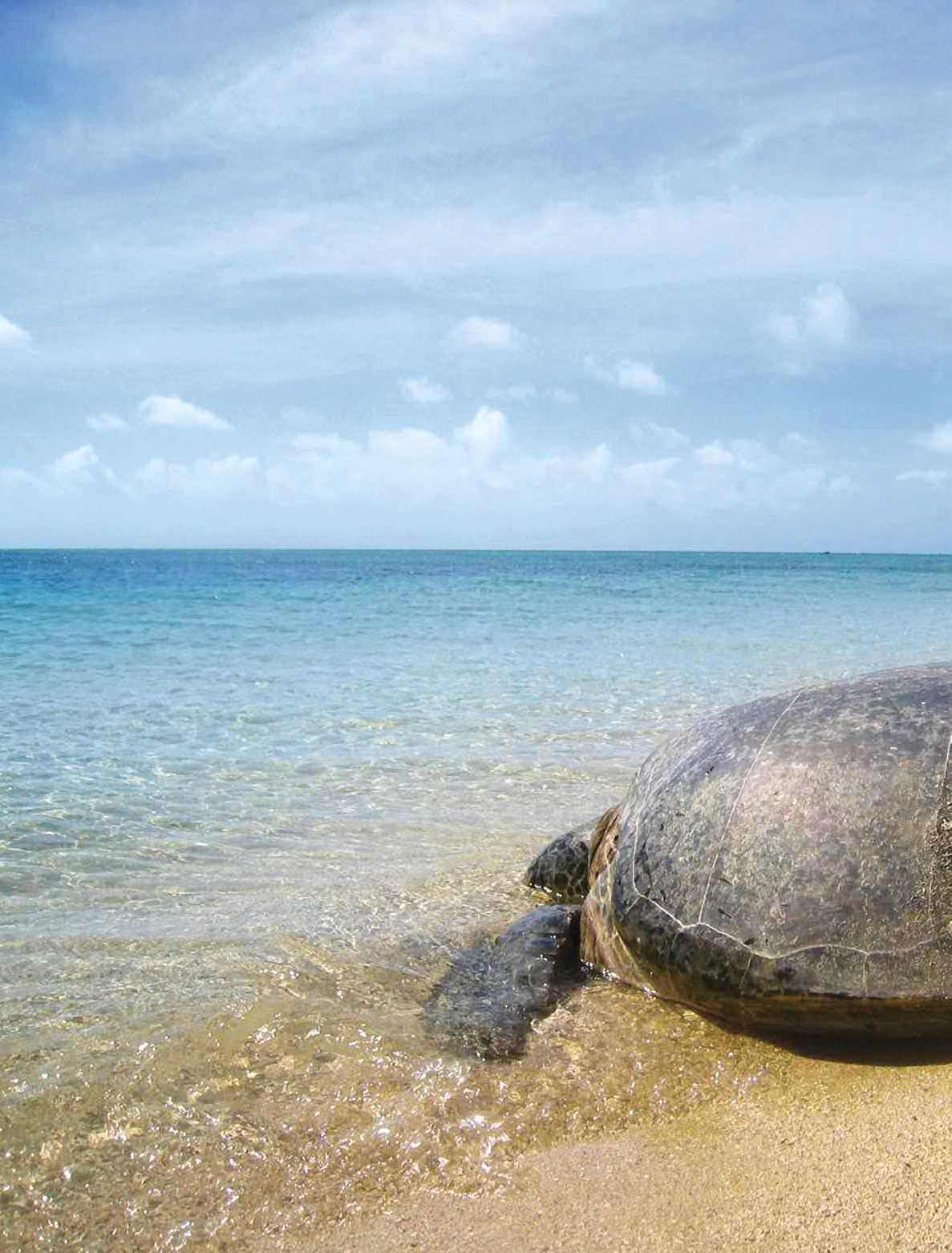 Turtle Genes Animals Sea Temperature