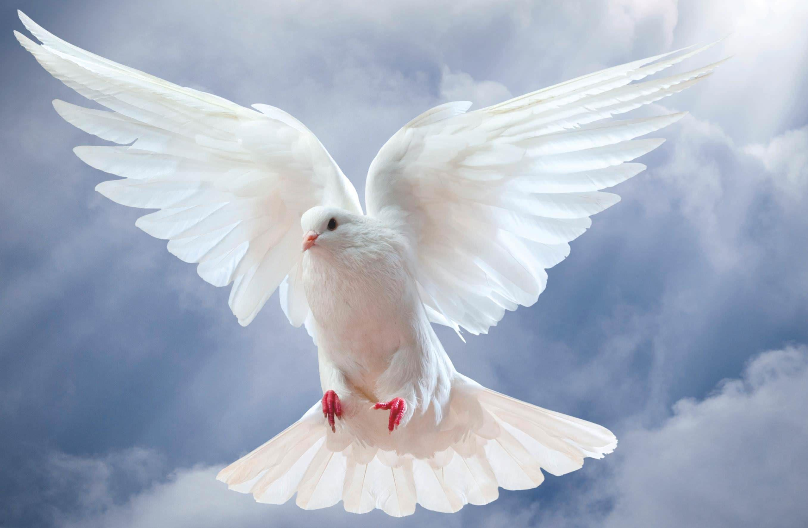 Image result for dove