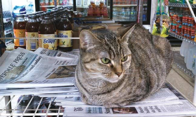 Whats A Bodega Cat